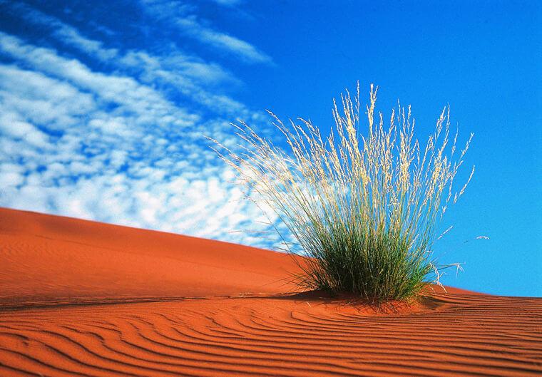 Kalahari woestijn Noord Kaap Zuid-Afrika