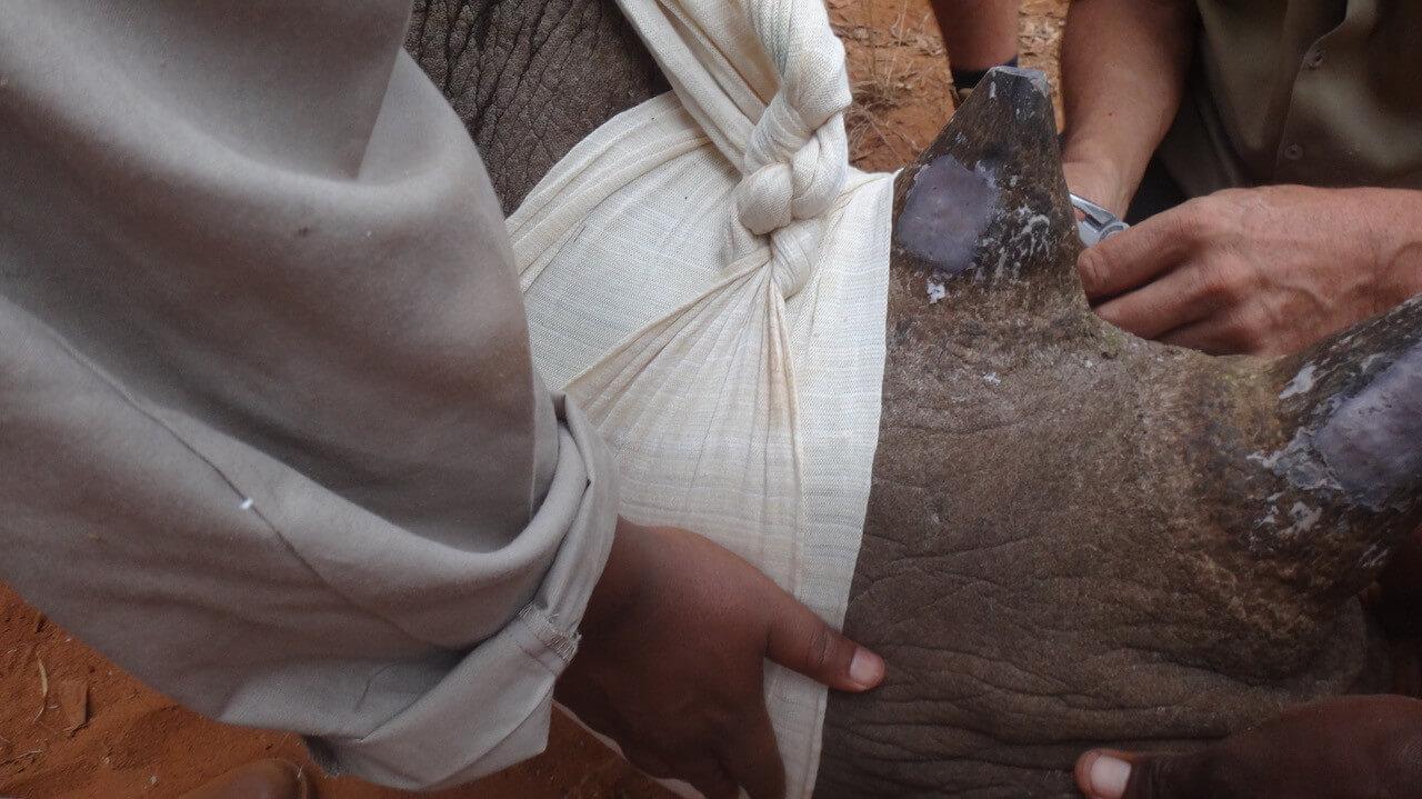 Sensoren in hoorn beschermen zwarte neushoorns in Tanzania