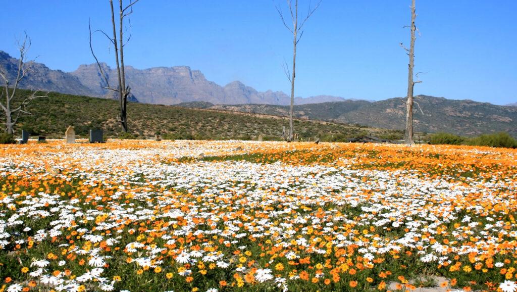 Uitzicht Ramskop Nature Reserve Zuid-Afrika