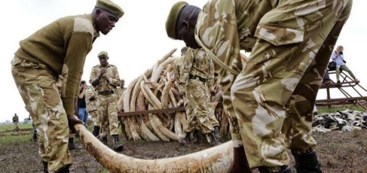 Minder olifanten gedood in Afrika