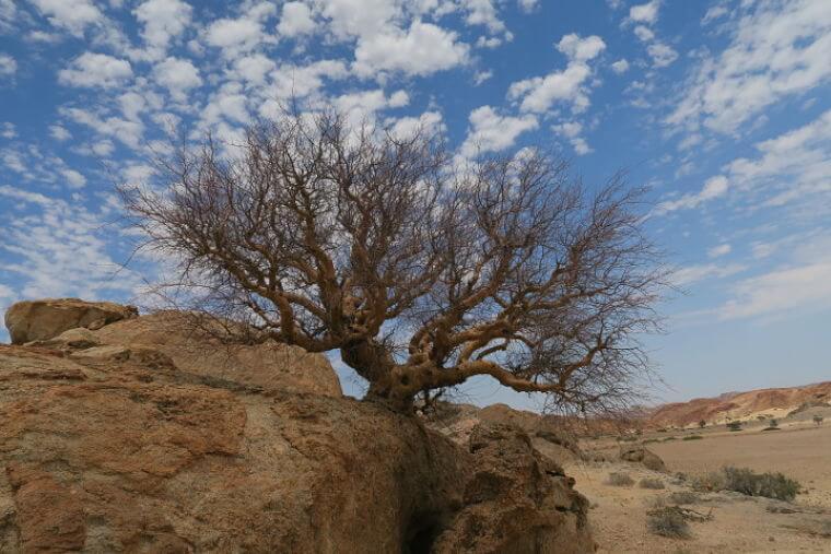 Wüstenquell Guest Farm sterke bomen in ruwe omgeving
