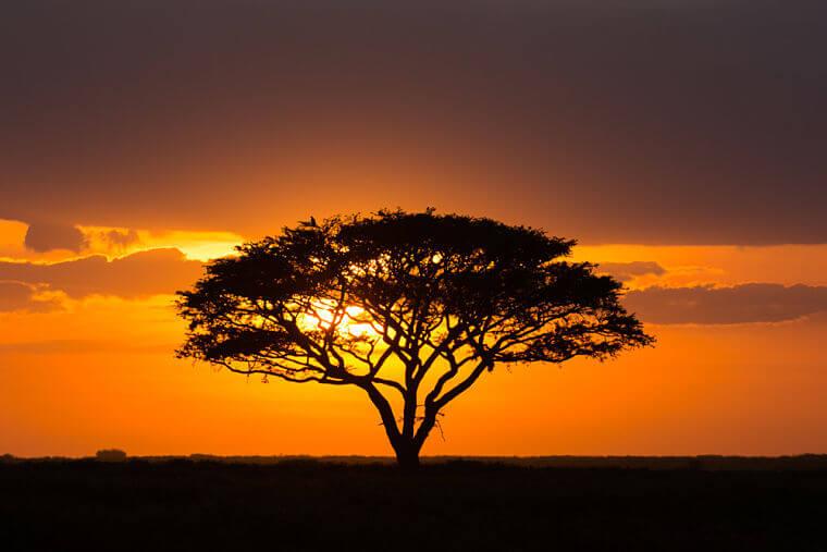 Karakteristieke zonsondergang boven Serengeti National Park Tanzania