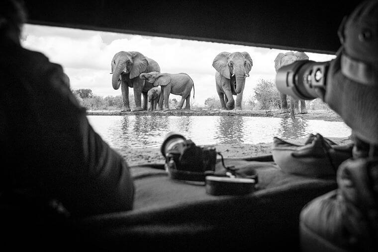 Wildlife fotografie vanuit een hide in Mashatu Botswana