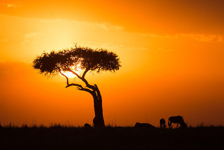 Zonsondergang boven Masai Mara National Reserve Kenia