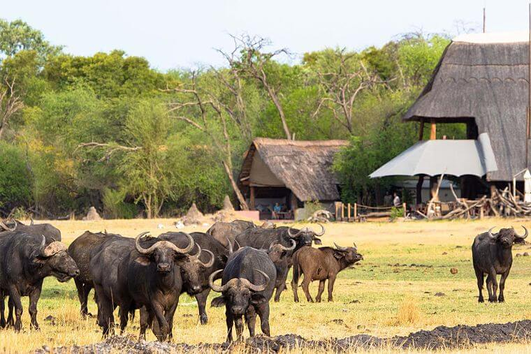 The Hide in Hwange National Park Zimbabwe