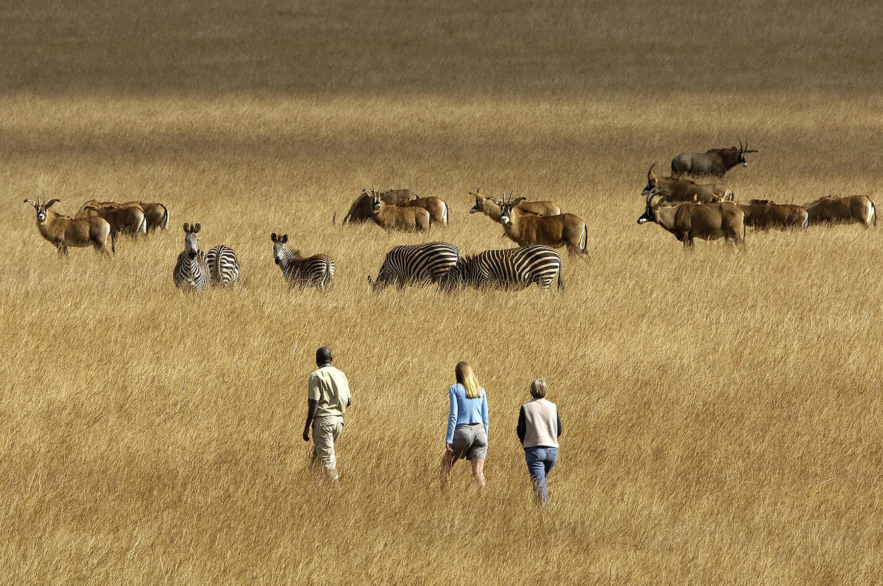 Wandel safari op Nyika Plateau Malawi