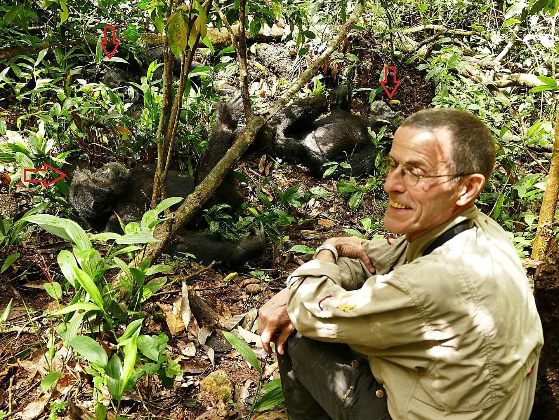 André van Hecke bij chimpansees in Uganda