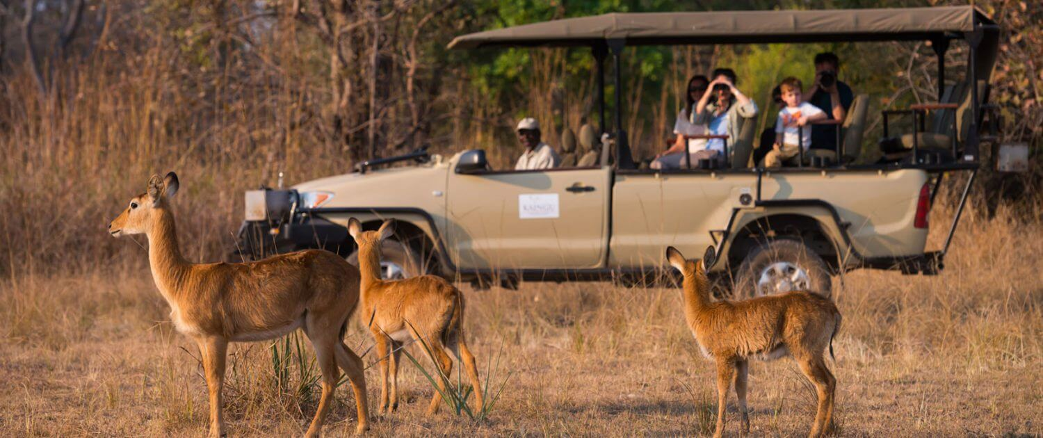 Game drive in Kafue National Park Zambia