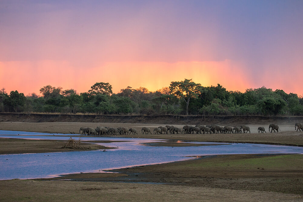 Olifanten steken de Luangwa rivier over in South Luangwa Zambia