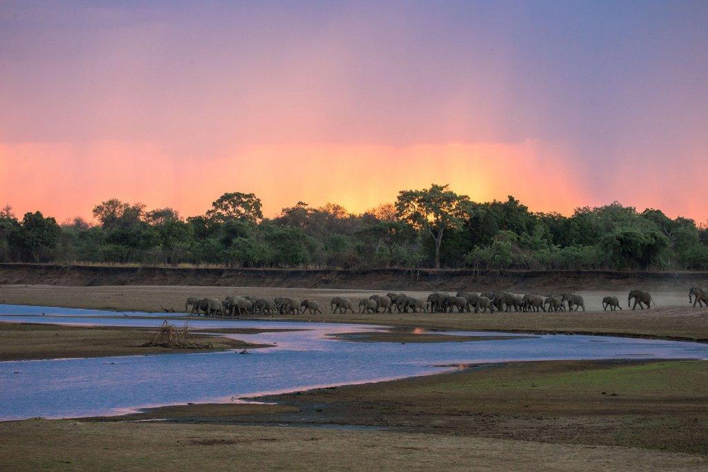 South Luangwa National Park, Olifanten steken de Luangwa rivier over, Zambia