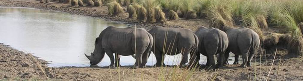 Ziwa Rhino Sanctuary Murchison Falls National Park Uganda