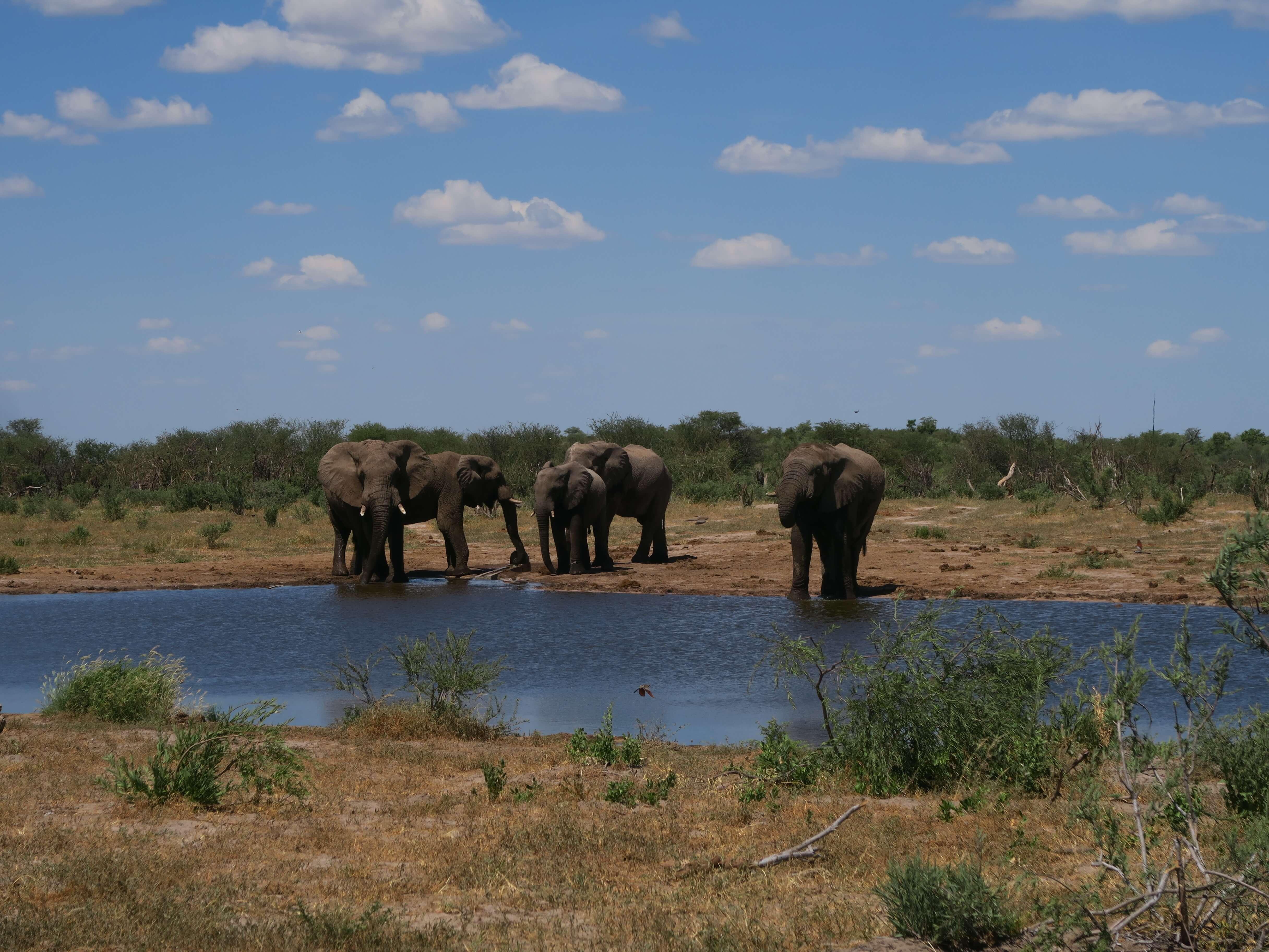 Olifanten bij Xaka waterhole in Central Kalahari Game Reserve Botswana