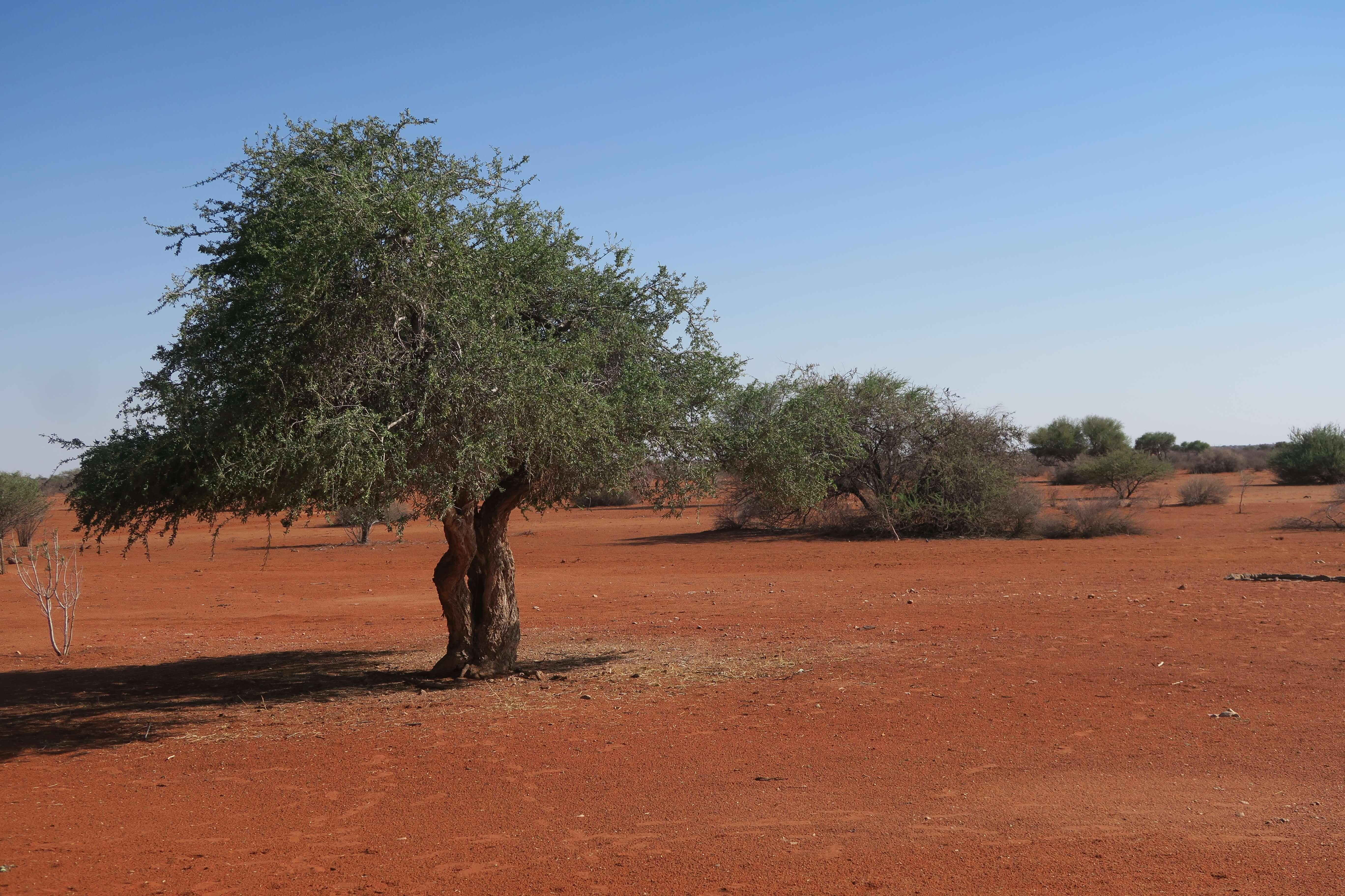 Kalahari Desert in Namibië