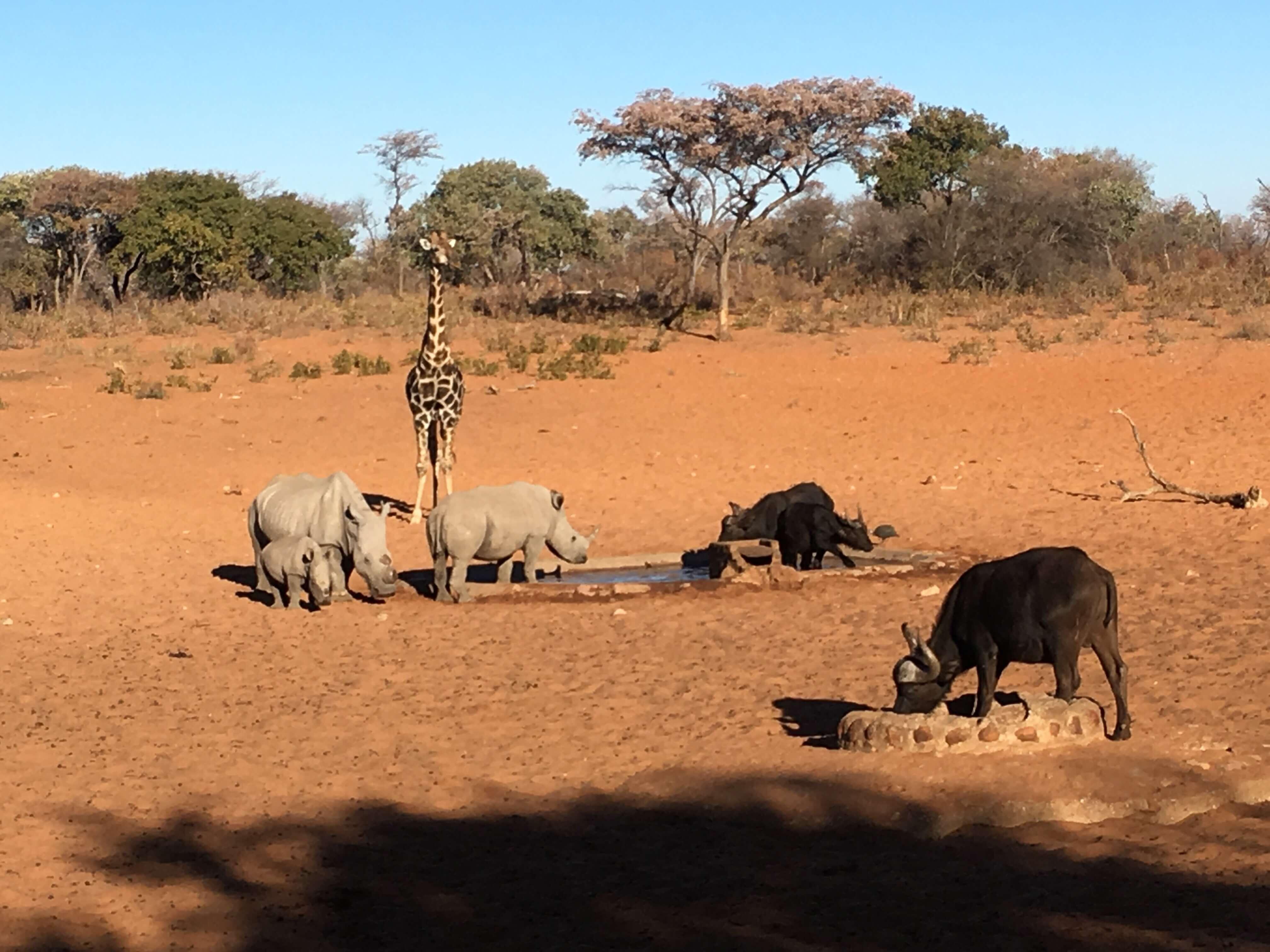 Drukte bij waterhole in Namibië