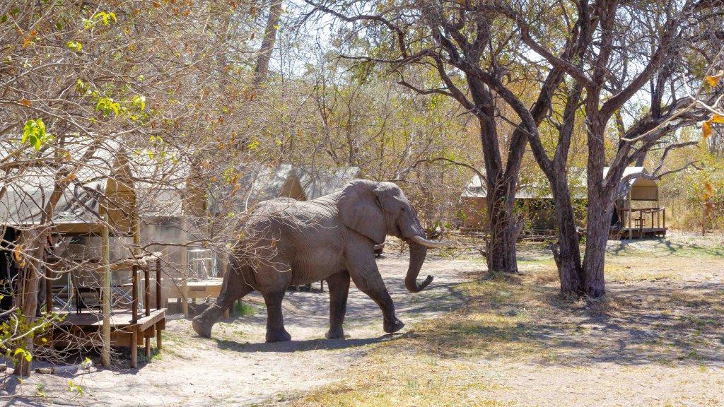 O Bona Moremi Lodge Botswana