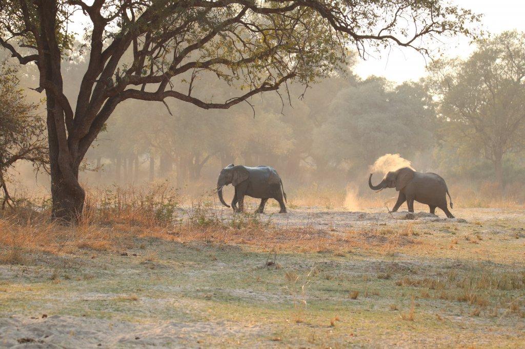 Olifanten in South Luangwa National Park Zambia