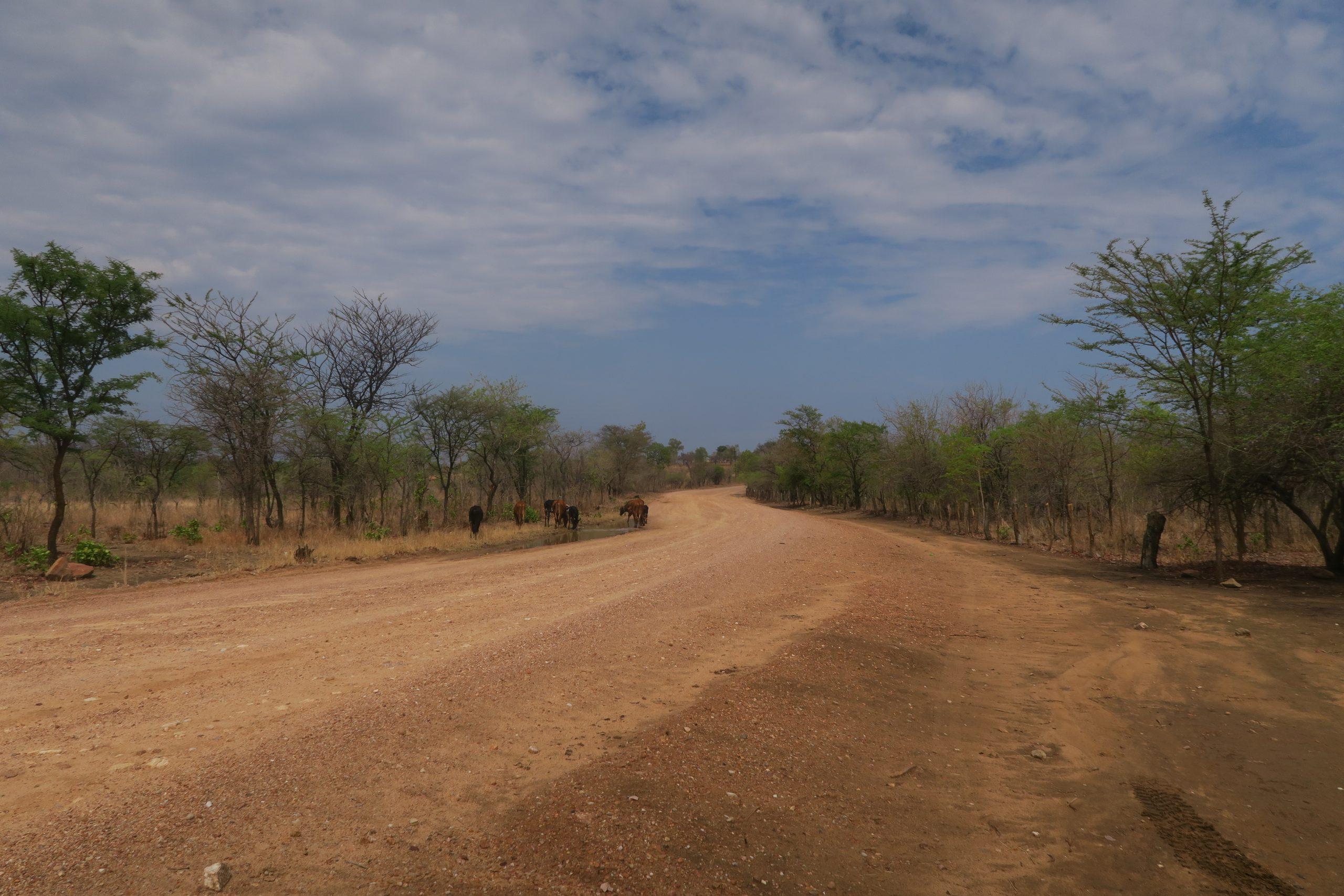 Back Road Lake Kariba Zimbabwe