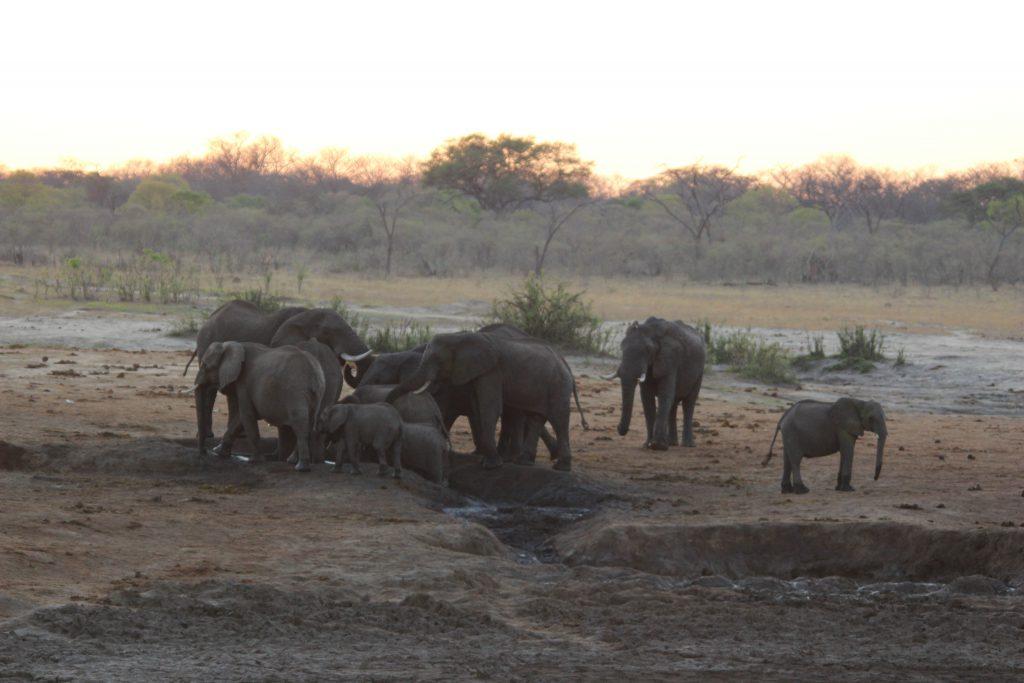 Groep olifanten in Hwange National Park, Zimbabwe