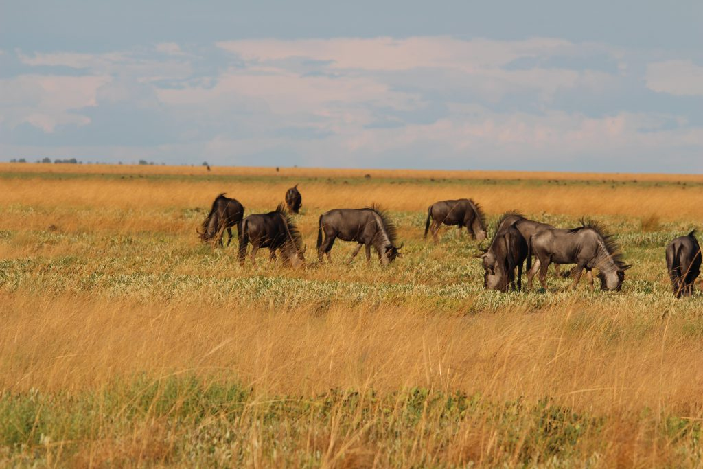 Liuwa Plains, Zambia