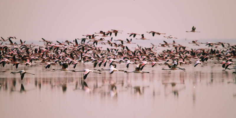 Flamingo's bij Nata Bird Sanctuary Botswana