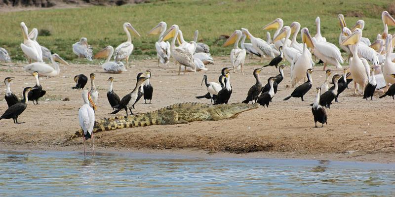 Kazinga Channel Queen Elizabeth National Park Uganda