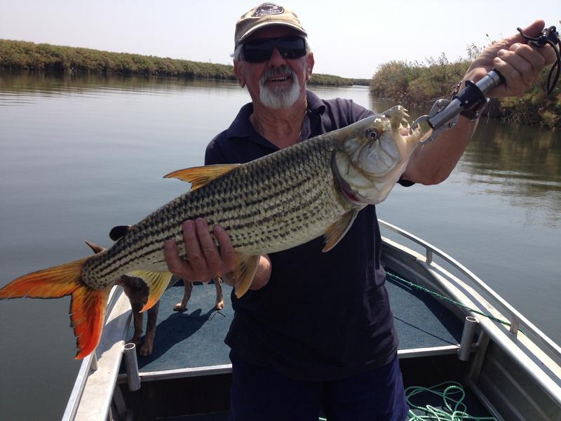 Vissen in Panhandle Okavango Delta Botswana
