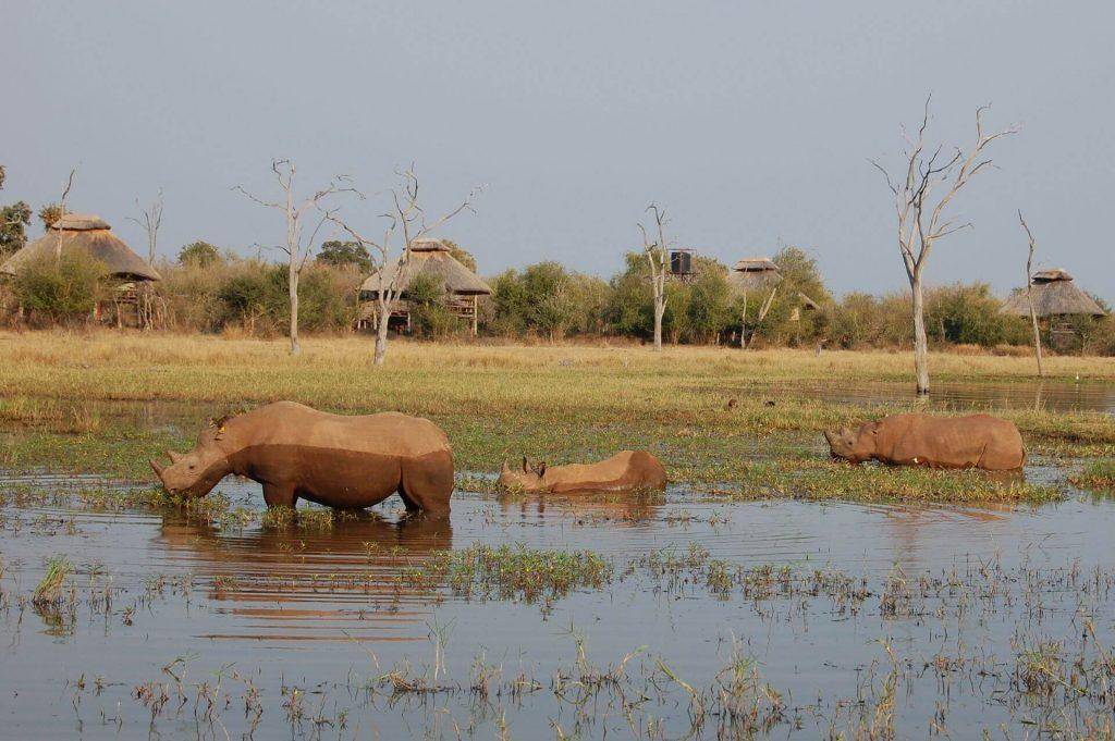 matusadona national park zimbabwe