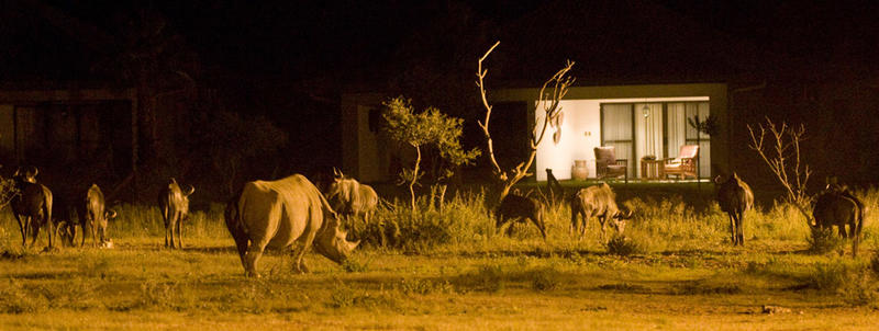Erindi Private Game Reserve Namibië