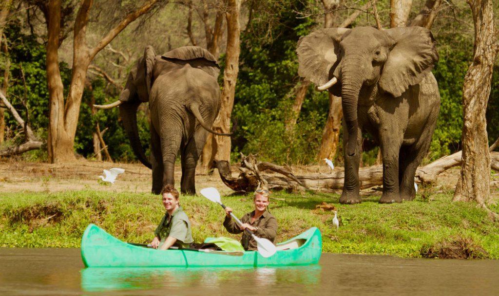 Olifanten tijdens kano safari Lower Zambezi National Park Zambia