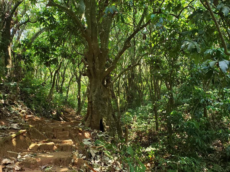 Wandel pad op Zomba Plateau Malawi