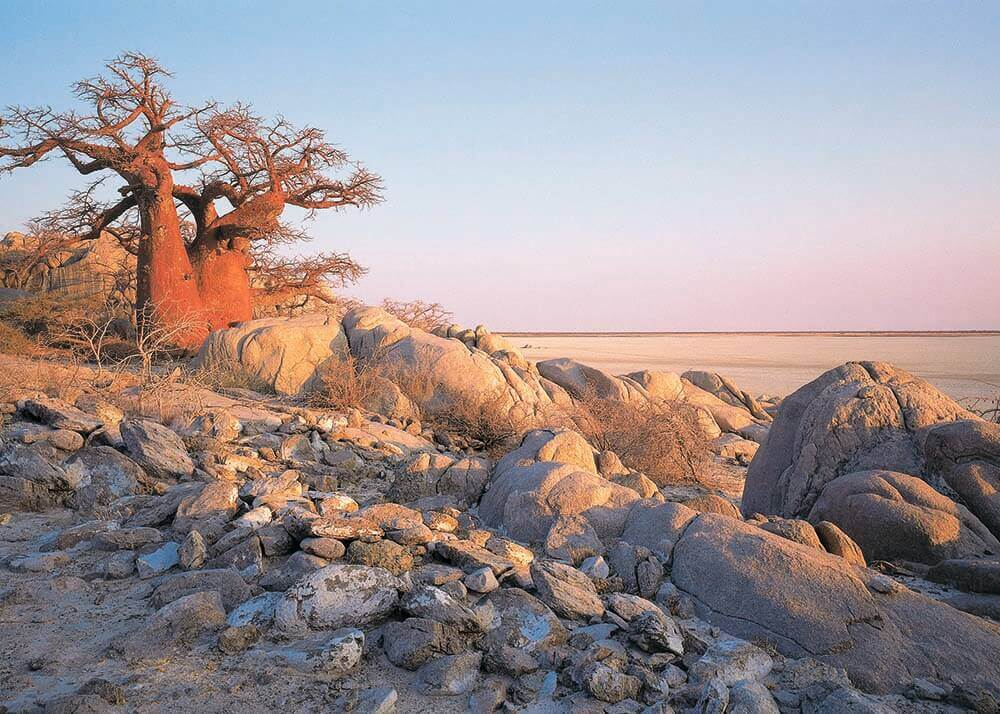 Kubu Island op Makgadikgadi Salt Pans Botswana