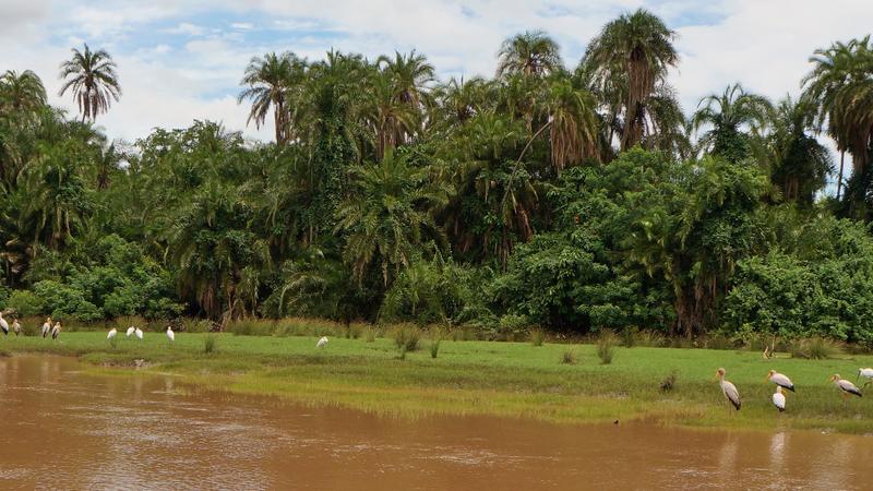 Mangroves in Saadani National Park Tanzania