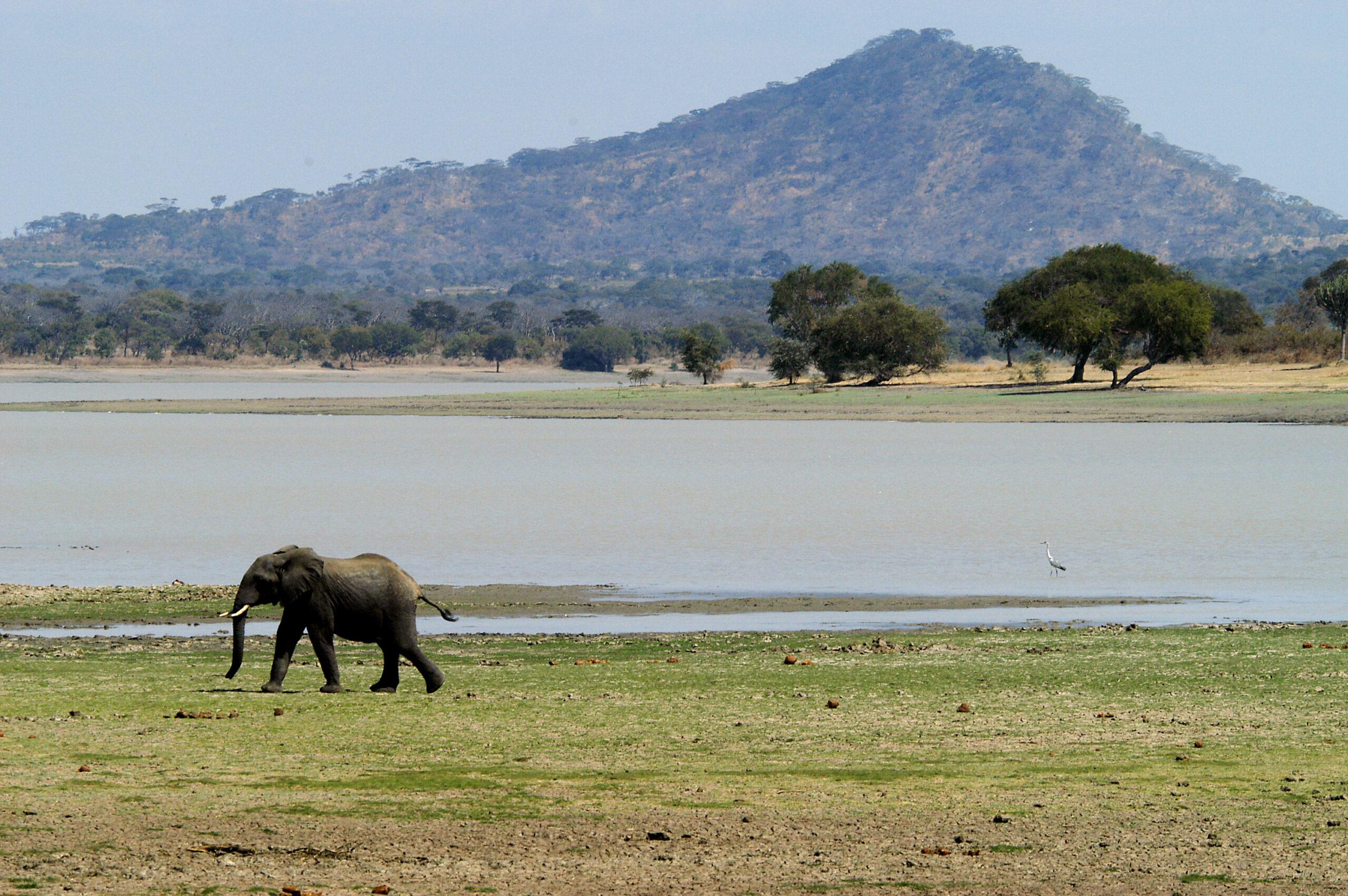 Olifant bij Lake Kazuni in Vwaza Marsh Wildlife Reserve Malawi