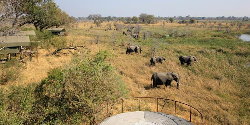 Olifanten in Mamili National Park Namibië