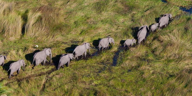 Olifanten in Mkomazi National Park Tanzania