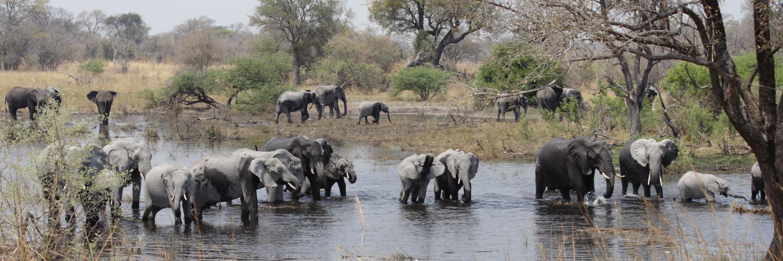 Olifanten in Mudumu National Park Namibië