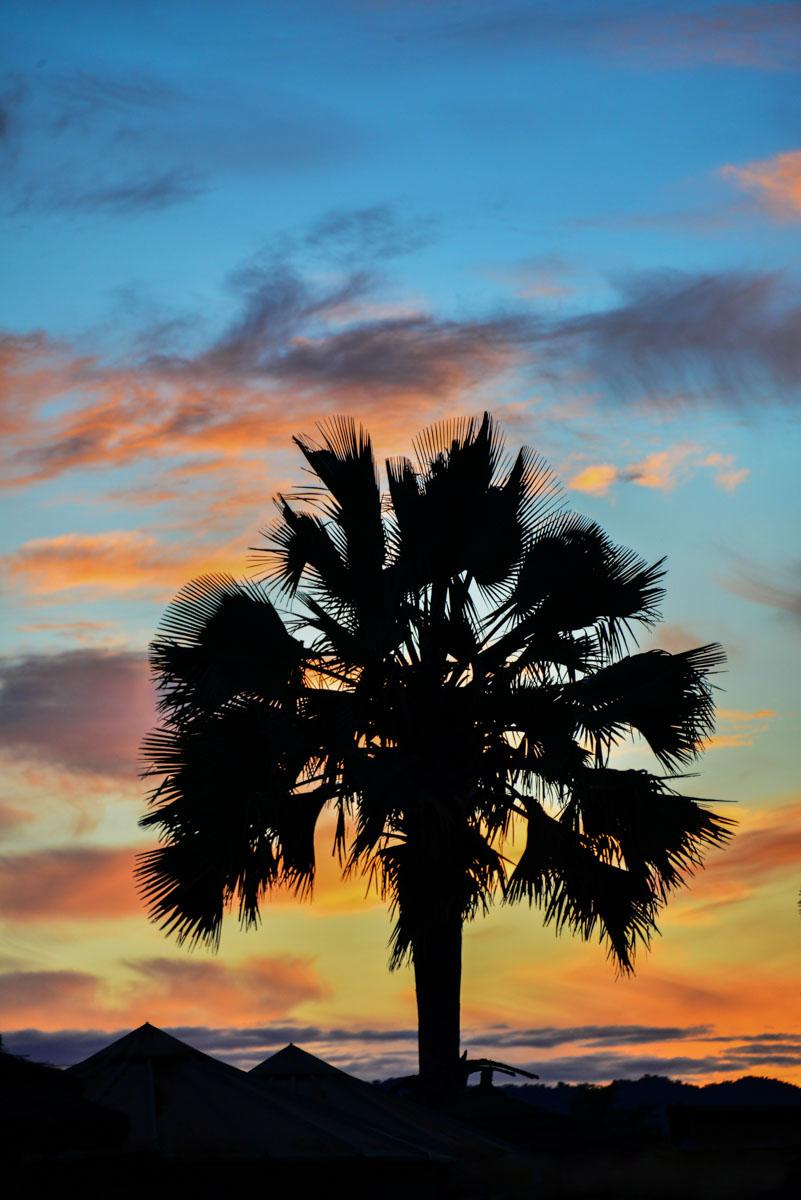 Palm tijdens zonsondergang in Kidepo National Park, Uganda
