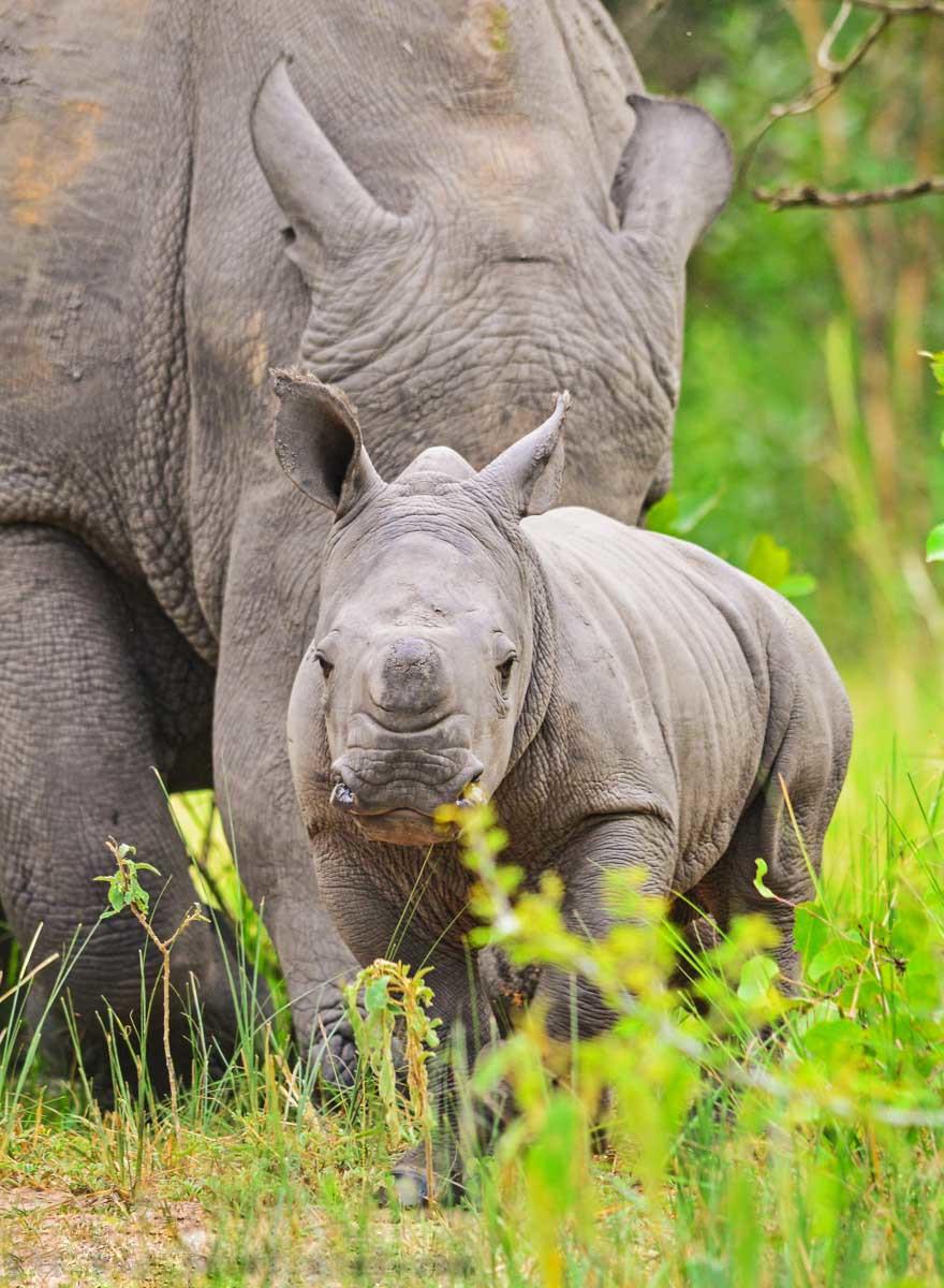 Ziwa Rhino Sanctuary, Uganda