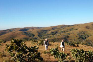 Wandelen op Viphya Plateau Malawi