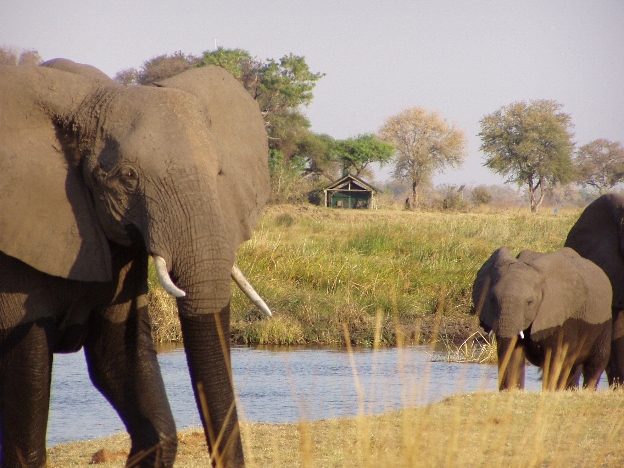 Olifanten bij waterhole Lagoon Camp Linyanti Wildlife Reserve Botswana